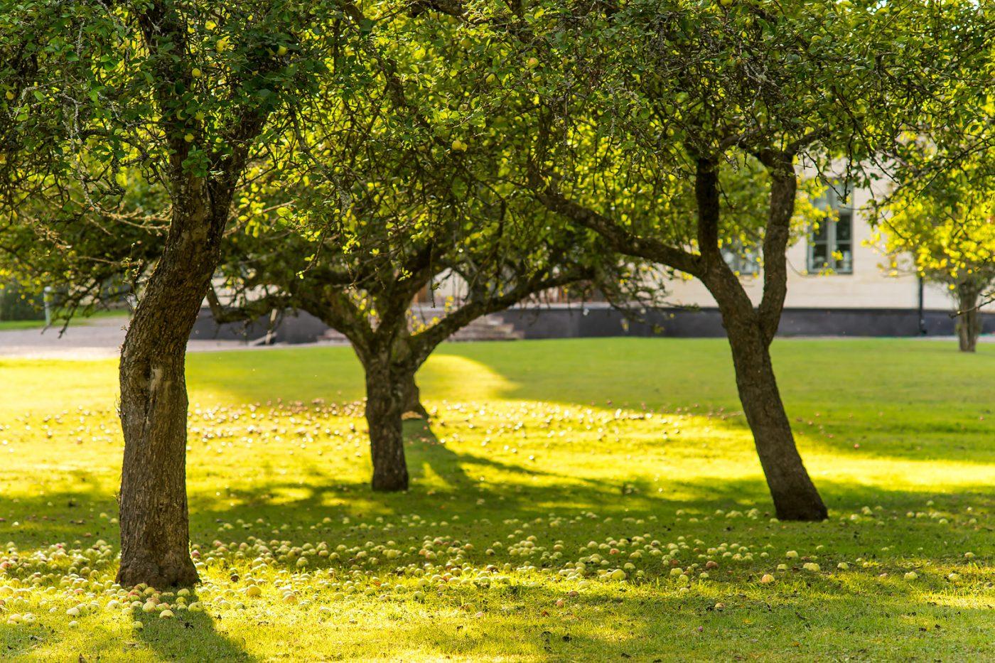 Drottningholms slottspark